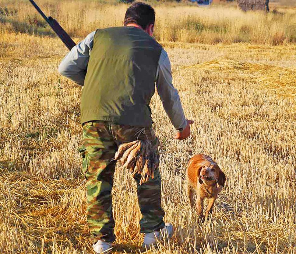 Benjamín Juez, cazador burgalés, cobra una codorniz la pasada temporada. - LEONARDO DE LA FUENTE