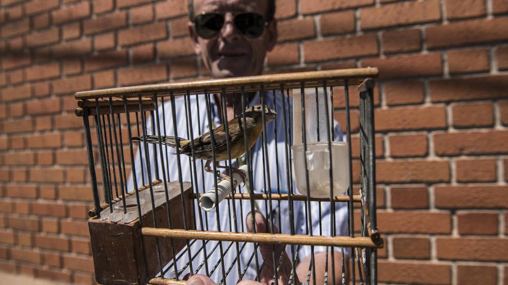 Juan de Dios, delegado nacional de silvestrismo en España, sujeta uno de sus pájaros para adiestramiento. (N. L. P.)