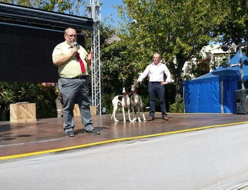 Una animalista destroza el stand del Club del Galgo Español al grito de 'asesinos'