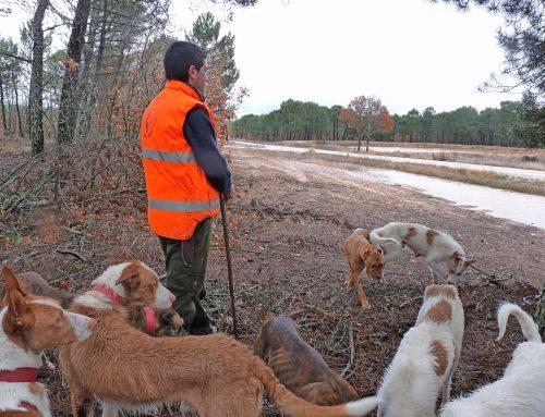 Cacerías por daños para federados en las zonas de caza controlada y cotos regionales