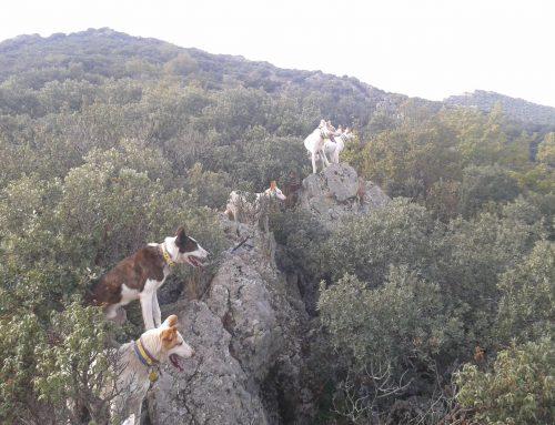 """Cacería por daños en """"Camaces-Torralba"""" (Salamanca)"""