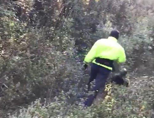 Un animalista boicotea impunemente una batida de jabalíes en Gerona