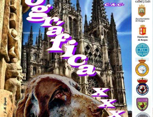 XXXV Monográfico del Perdiguero de Burgos