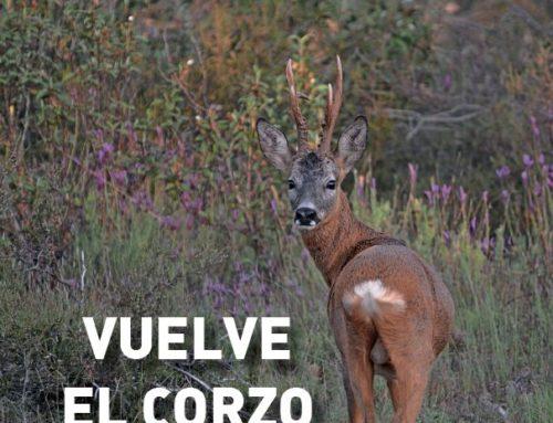 Revista cazadores de Castilla y León Nº14