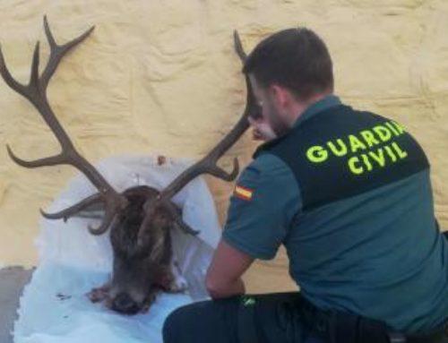 El Seprona investiga a cuatro cazadores furtivos y a un pescador que usaba red