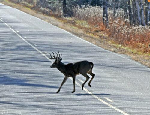 Peligro, las carreteras con más animales (León)