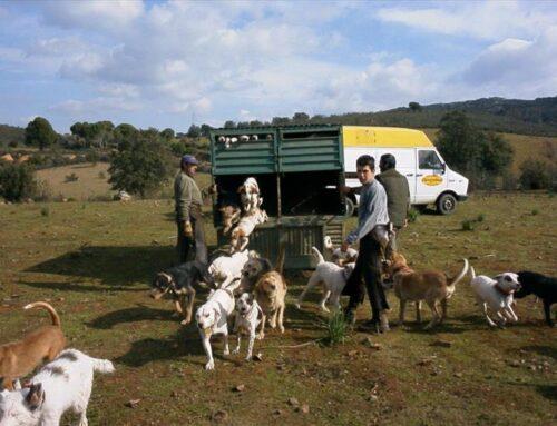 La Fiscalía archiva la causa por los perros despeñados en una montería
