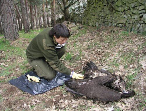 Juzgados por colocar cebos con veneno para matar aves