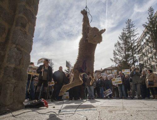 La Junta permitirá cazar 339 lobos al norte del Duero