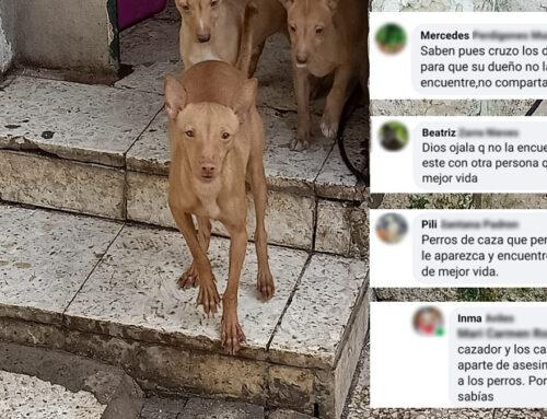 Pierde a su perra de caza y los animalistas hacen campaña para que no la encuentre
