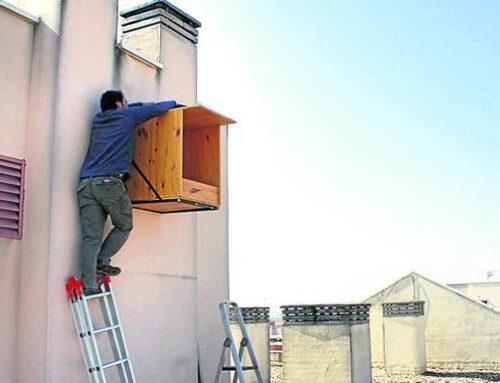 Burgos intentará controlar con halcones peregrinos la población de palomas en la ciudad
